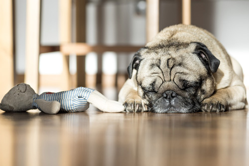 How to Remove Pet Odours